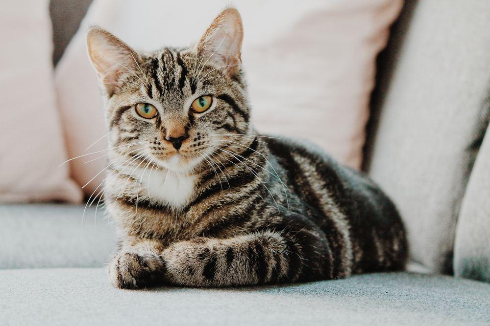 Kattpensionat – en trygghet för ägare